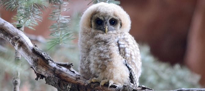 True Owl Facts to Smile About!