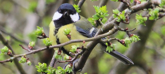 The Universal Truths of Birding – Deliberate Intention