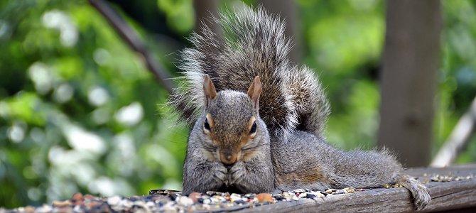 A Smile-Worthy Squirrel Deterrent!