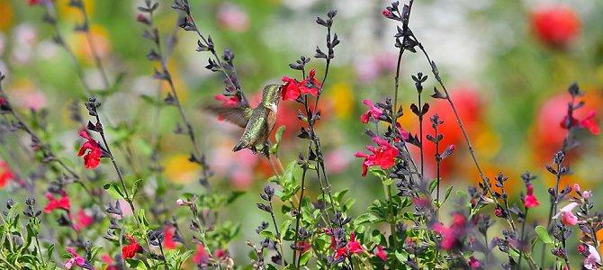 Wildlife Gardening – All Year Long!
