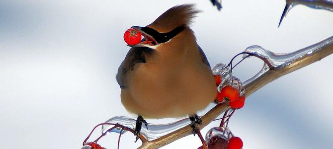 Masked Bird Photo Gallery