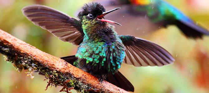 Hummingbird Jokes