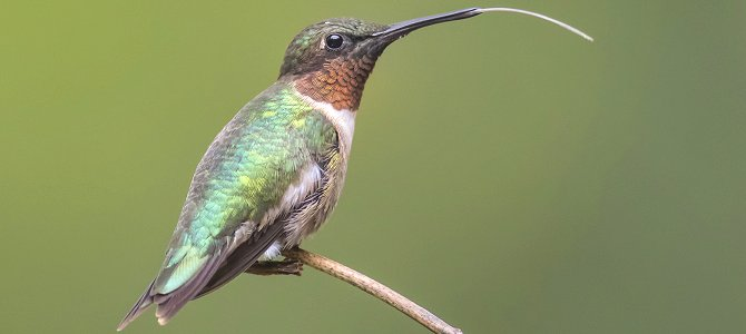Hummingbirds Are Brats