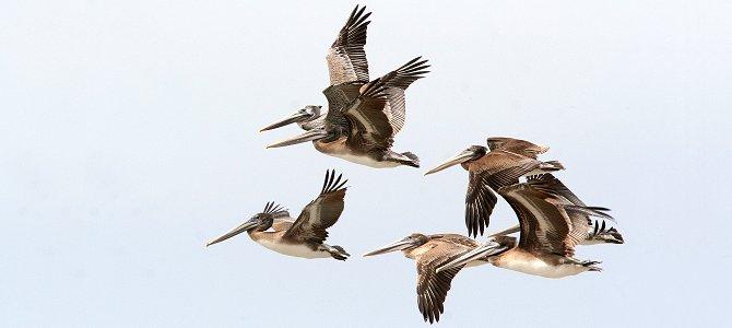 The Universal Truths of Birding