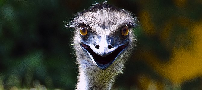 Wednesday Smile – The Emu War!