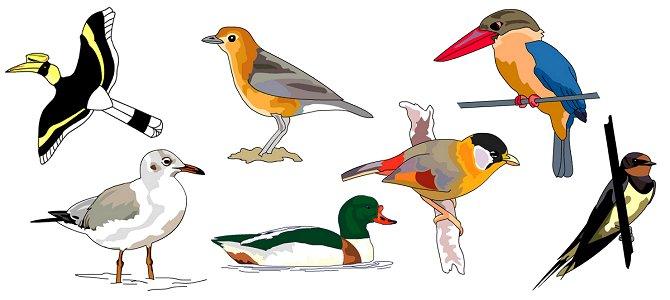 It's Draw-a-Bird Day!