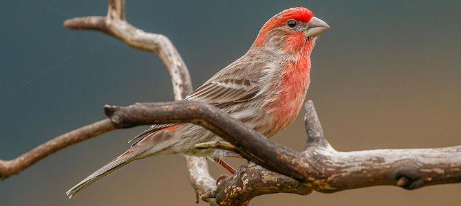 The New Old Yard Bird