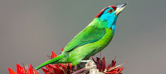 The Universal Truths of Birding – Education