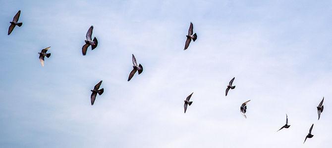 Rediscovering the Thrill of Flight