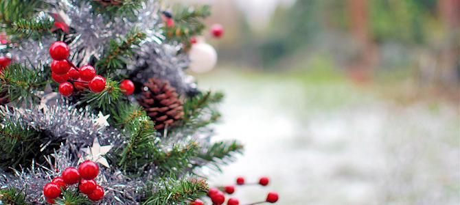 The 12 Days of Christmas – Birds!