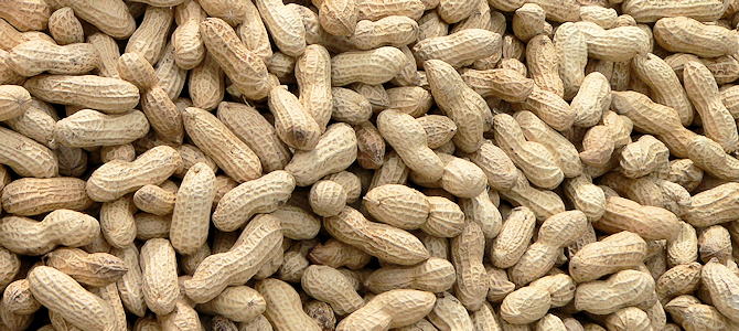 Peanuts Are the Perfect Winter Bird Food