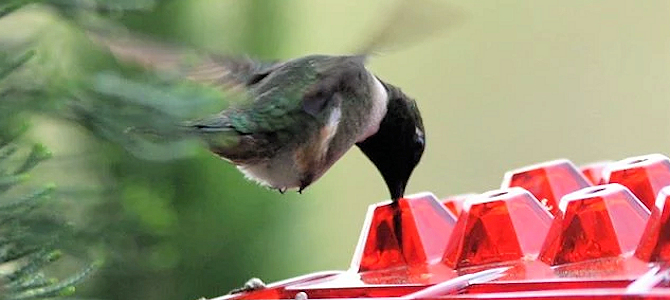 The BEST Hummingbird Feeders Ever
