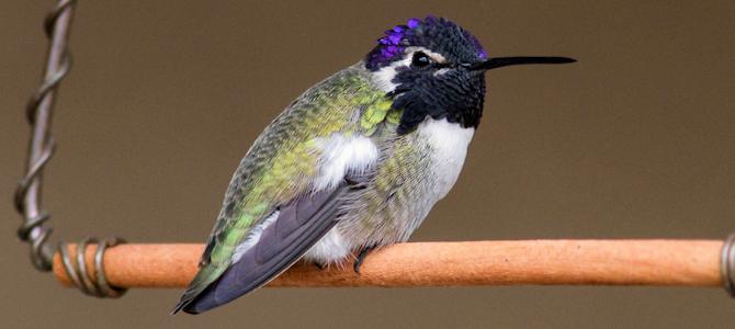 Hummingbird Swings – The Perfect Perch