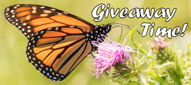 Giveaway Time – Butterfly Feeders!