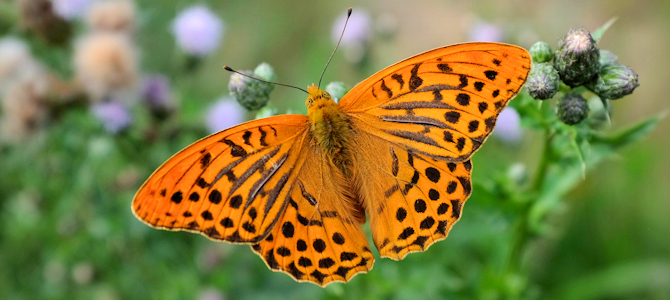 When Birds Turn Into Butterflies